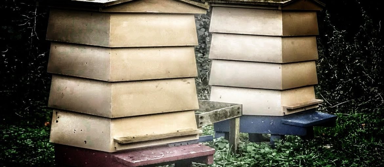 Beardy the Beekeeper - History of Beekeeping